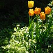 Tulip #1 Poster