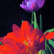 Tulip 15 Poster