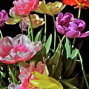 Tulip 8 Poster