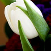 Tulip Arrangement 4 Poster