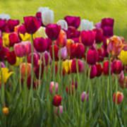 Tulip Bed  0117op Poster