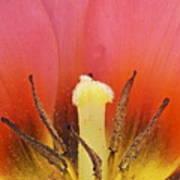 Tulip Center Poster