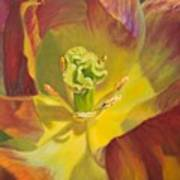Tulip Closeup No. 1 Poster