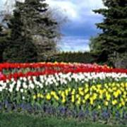 Tulip Country Poster