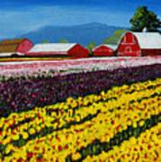 Tulip Fields Poster