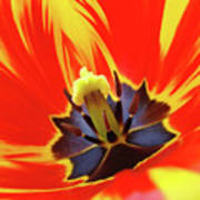 Tulip Flower Floral Art Print Red Yellow Tulips Baslee Troutman Poster