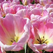 Tulip Flowers Garden Art Pink Tulips Baslee Troutman Poster