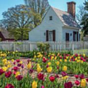 Tulip Garden  Poster
