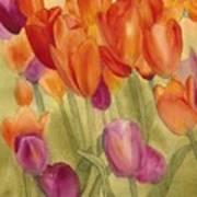 Tulip Glory Poster