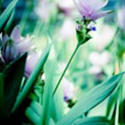 Tulip In Pastel Poster