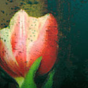 Tulip Of Love Poster