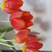 Tulip Shadow Poster