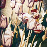 Tulip Sheltered Poster