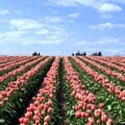 Tulip Town 12 Poster