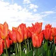 Tulip Town 17 Poster