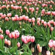 Tulip Town 8 Poster