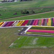 Tulip Town Aerial Poster