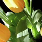 Tulip Trio Poster