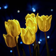 Tulip Twinkle Poster