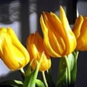 Tulipfest 2 Poster