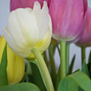 Tulips #2 Poster