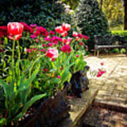 Tulips And Bench Poster