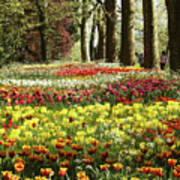 Tulips Everywhere 1 Poster