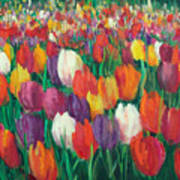 Tulips Everywhere Poster