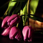 Tulips In Evening Sunlight Poster
