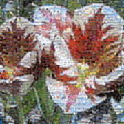 Tulips In Springtime Photomosaic Poster