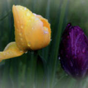 Tulips In The Rain Poster