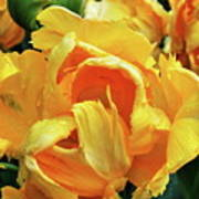 Tulips In Yellow Too Poster