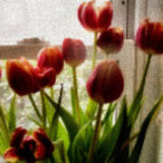 Tulips Poster by Karen Scovill