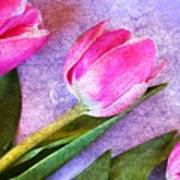 Tulips Meets Texture Poster
