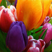 Tulips Smiling Poster