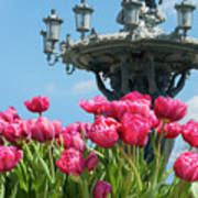 Tulips With Bartholdi Fountain Poster