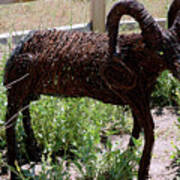 Tumble Weed Sheep Reno Nevada Poster