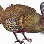 Turkey, 1560 Poster