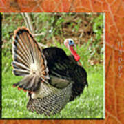Turkey Strut Poster