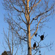 Turkey Vulture Tree Poster