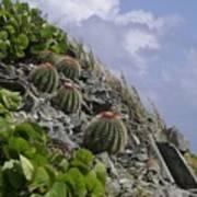 Turks Cap Cactus Poster