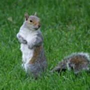 Turning Squirrel Poster