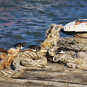Turnstones At The Harbour Poster