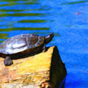 Turtle Basking In The Sun Poster by Wingsdomain Art and Photography