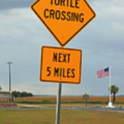 Turtle Crossing Poster