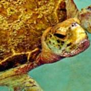 Turtle Life Poster