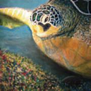 Turtle Run Poster