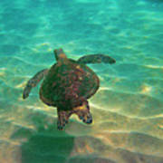 Turtle Sailing Over Sand Poster