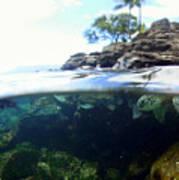 Turtle Tide Poster