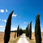 Tuscan Cypress Landscape Poster